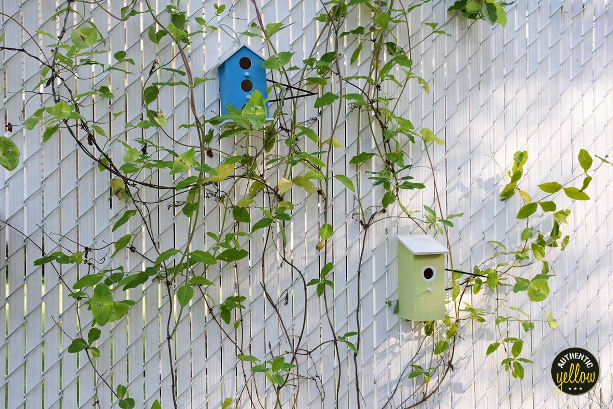 Blue and light green birdhouses, white fence