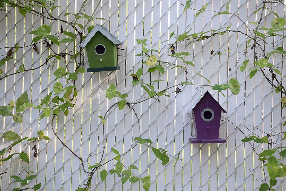 Green and purple birdhouses, honeysuckle